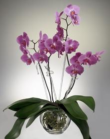 orchideen01k